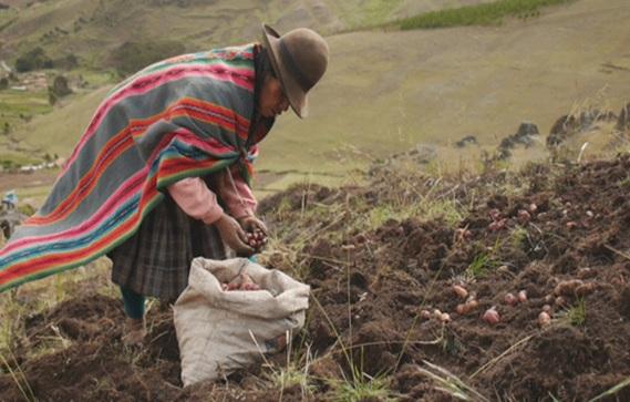 06 Perusivan potato farmer